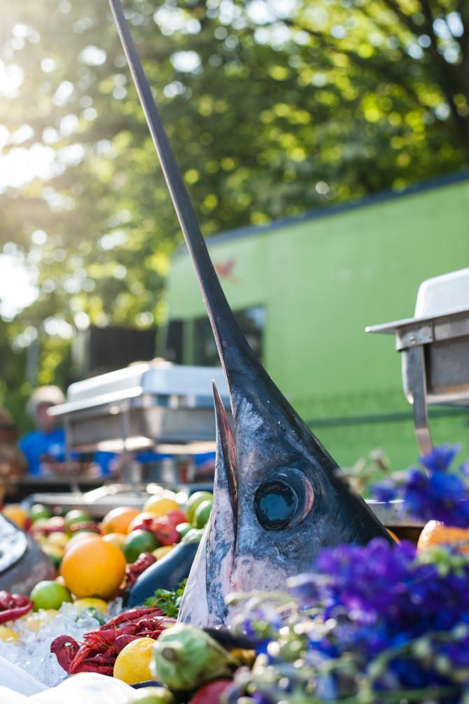 Foto van de Week #1 - Een zwaardvis
