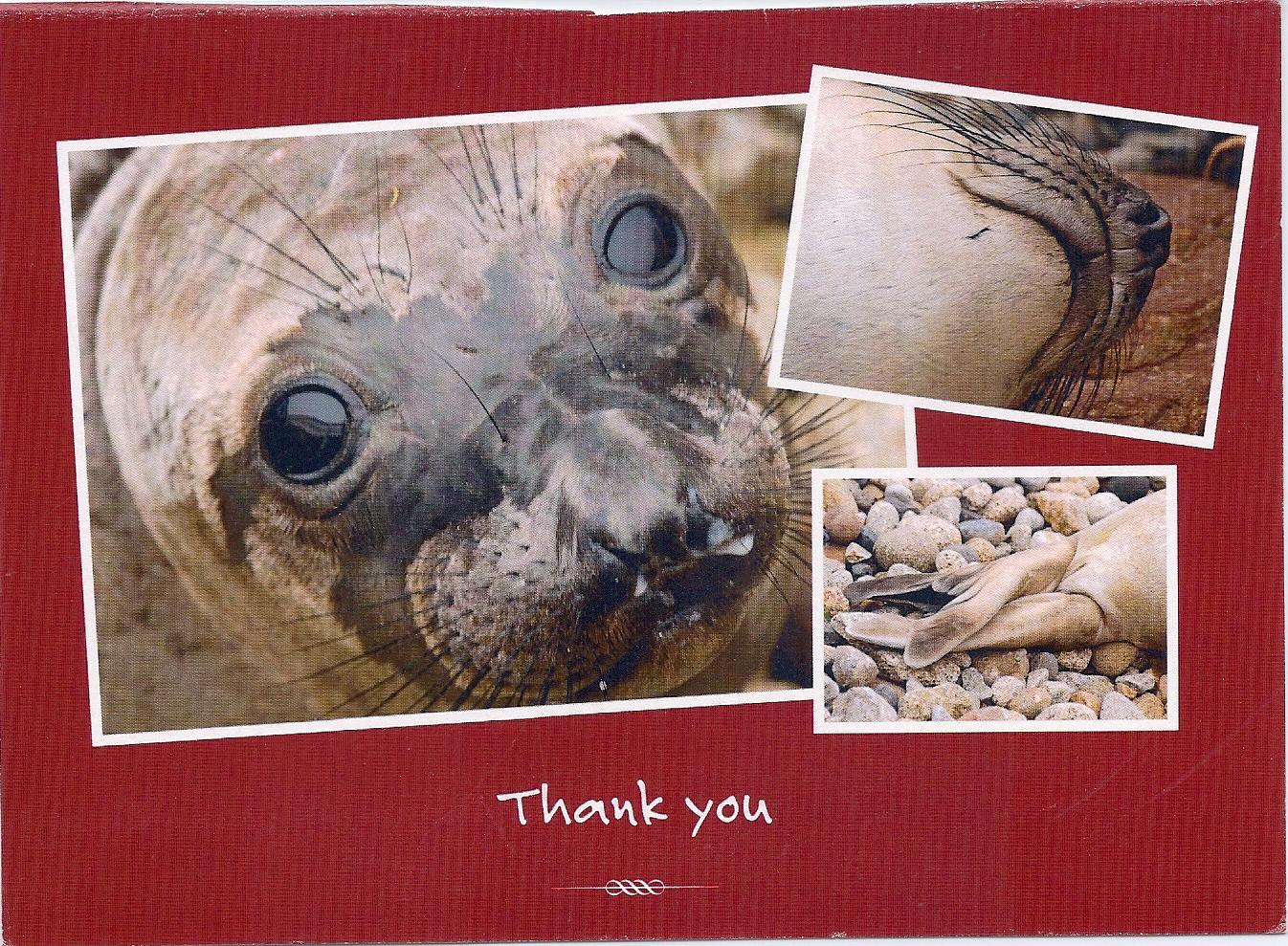 Pt Reyes Elephant seal