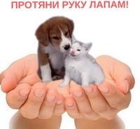 Акция «Протяни руку – лапам»