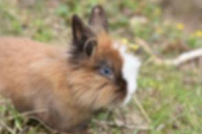 rabbit-4128153_1920.jpg
