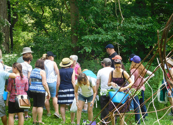 Herb Identification Walk & Medicine Making Workshop