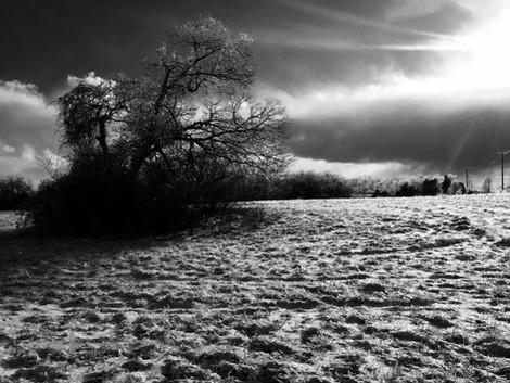 ice lone tree bw.jpg