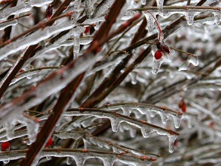 winterbuds.jpg