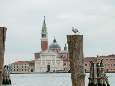 Venice Seagull Post Ls.jpg
