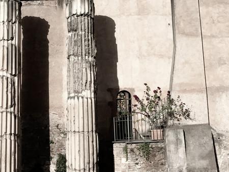 Dead Flowers and Columns.jpg