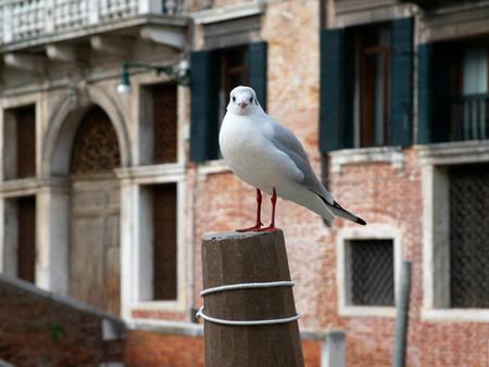 venice seagull on post.jpg