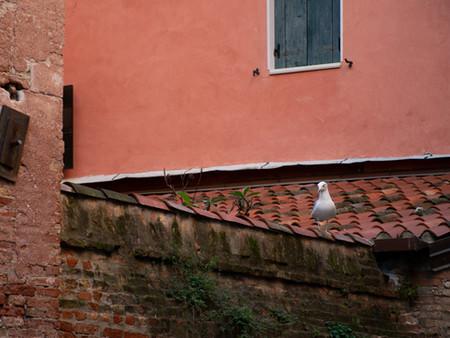 Red Roof white Birds.jpg
