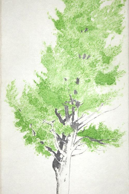 Belle et le pin du rang Kildare