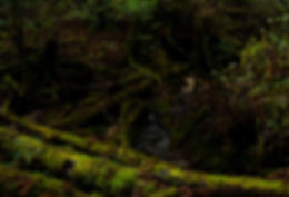 Forest Bathing_RYOKO