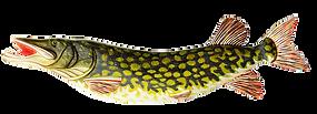 Рыба в подарок рыбаку. Рыба тематический подарок рыболову. Рыба на стену. Ручная работа.