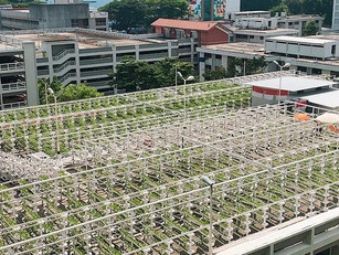 Episode 155: Singapore's Bold Plan to Build the Farms of the Future