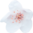 Blossom-1.png