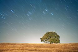 TX_TREE-STAR-TRAILS