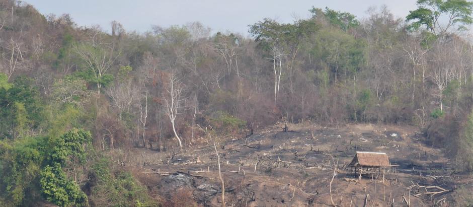 L'abattis-brûlis au Nord du Laos