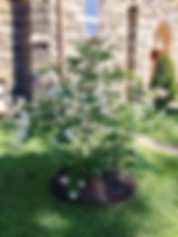 DONE Summer plantings.JPG