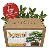 Bonsai Anzucht