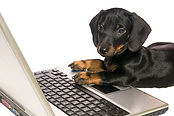 dog-laptop-small.jpg