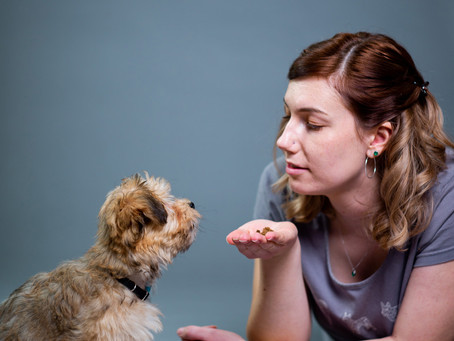 Here to Stay - Training Your Puppy