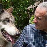 roger-abrantes-wolf.jpg