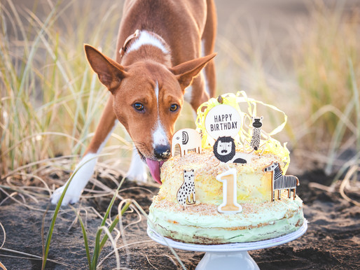A Dog Birthday Shoot!