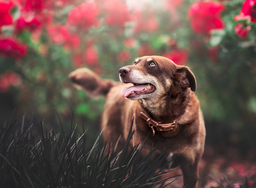 Working with elderly pets