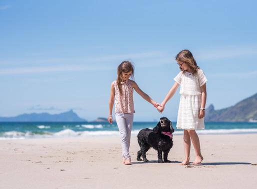 a pet photographer's purpose