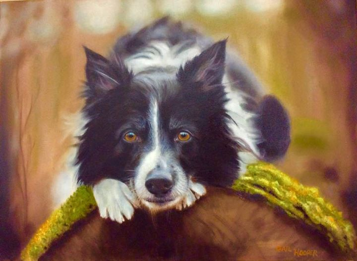 """Border Collie"""
