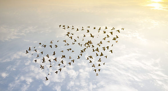 IMAGE-Migrating_birds_clouds-e1527010216