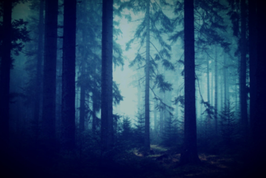 forest-1208296_1920_edited_edited_edited