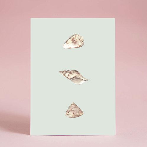 Carte Coquillages