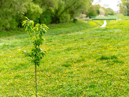 Independent publisher will plant a tree for every book title published