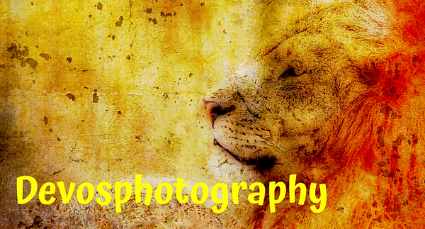 devosphotography.png