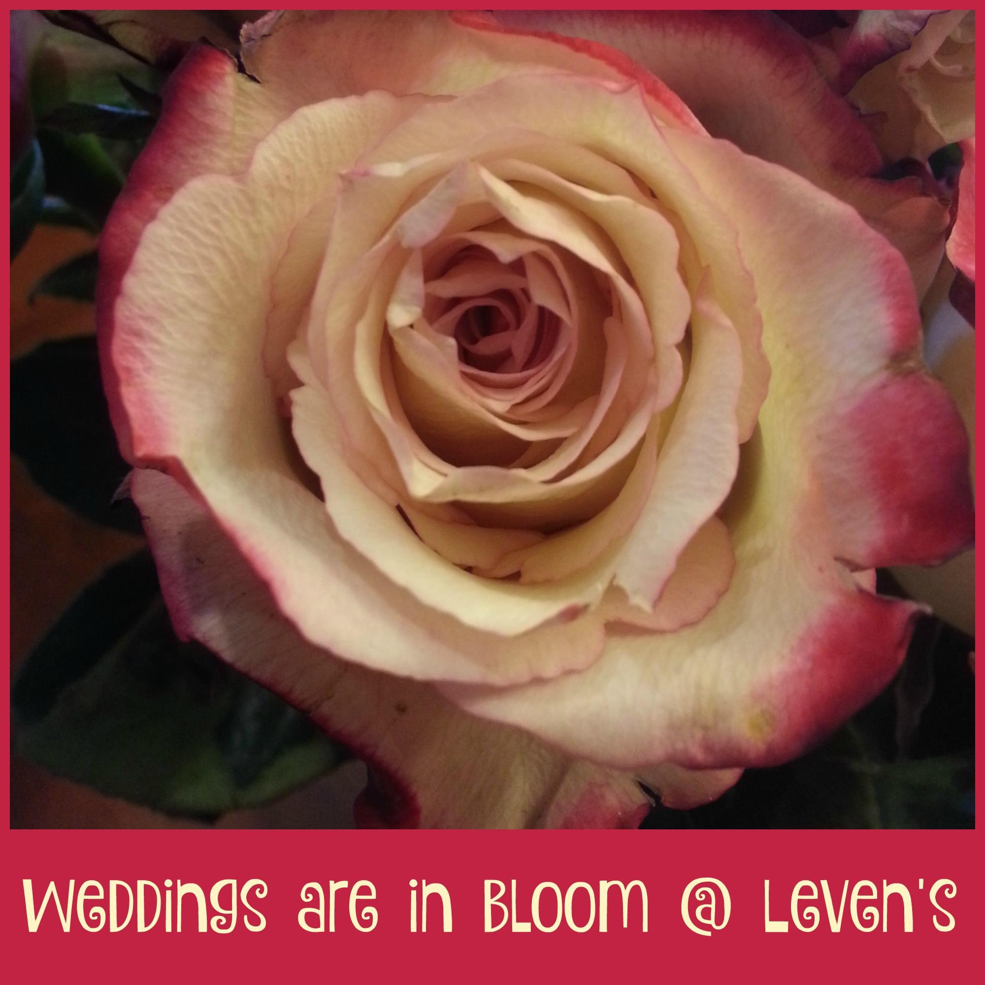 Weddings are in Bloom in Logan, Utah