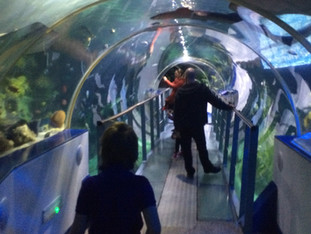 The Sea Life Centre and Laser Tag
