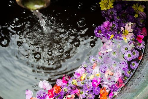 Canva - Flowers Floating on Water.jpg
