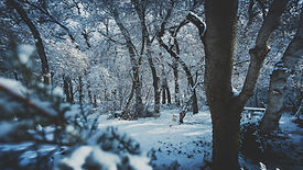 Canva - Snow Covered Forest.jpg