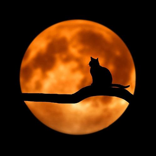 Samhain's Full Blue Ancestor's Moon Intention Oil
