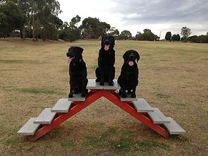 Dog Walking Melbourne