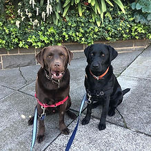 Dog Obedience Training Melbourne