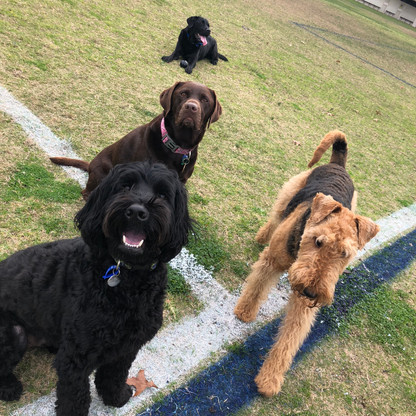A gorgeous dog walking crew ready for action!