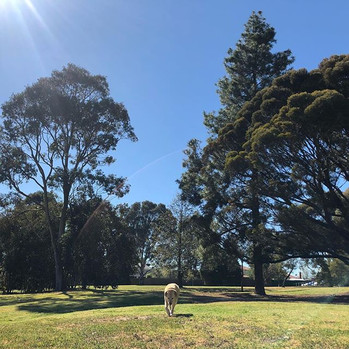 A beautiful day for a dog walking adventure!