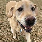 Harry - Heads & Tails Dog Walking Melbourne