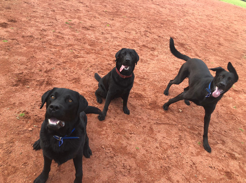 Diesel, Louie, and Hector during their walk at Kooyong Park!