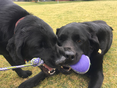 What are the best and most durable toys for dogs?