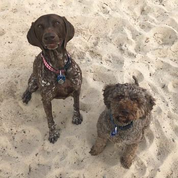 Winnie and Bonnie enjoying the sand!