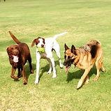 Harley & Reba - Heads & Tails Dog Walkin