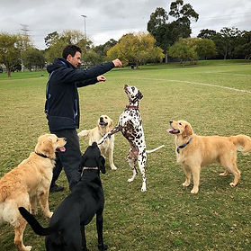 Dog Adventures Melbourne Walking Training Pet Sitting