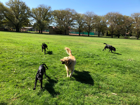 Dog Walking Group at Ardrie Park!