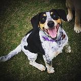 Missy - Heads & Tails Dog Walking Melbou