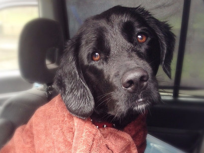 Don't like dog walking in the rain? Our expert tips to make it more enjoyable!